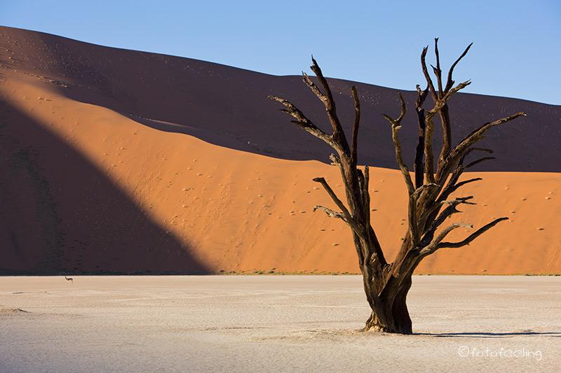 sossusvlei deadvlei namib namibia reise infos. Black Bedroom Furniture Sets. Home Design Ideas