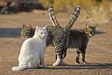 Katzenbande am Köcherbaumwald