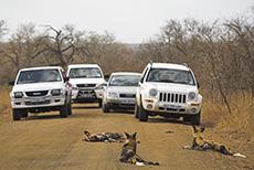 Belagerung der Wildhunde