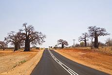 auf dem Weg nach Mapungubwe