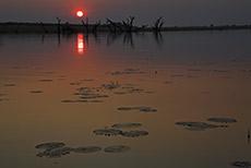 Sonnenuntergang auf dem Chobe