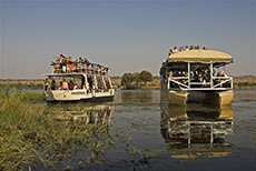 Rushhour auf dem Chobe