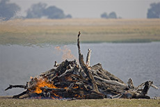 wegen Milzbrandverdacht wurde der Elefantenkadaver verbrannt