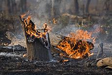 Waldbrand am Khwai